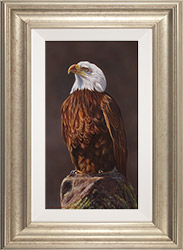 Wayne Westwood, British Wildlife Artist at York Fine Arts