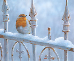 Wayne Westwood, Signed limited edition print, Winter Robin Large image. Click to enlarge