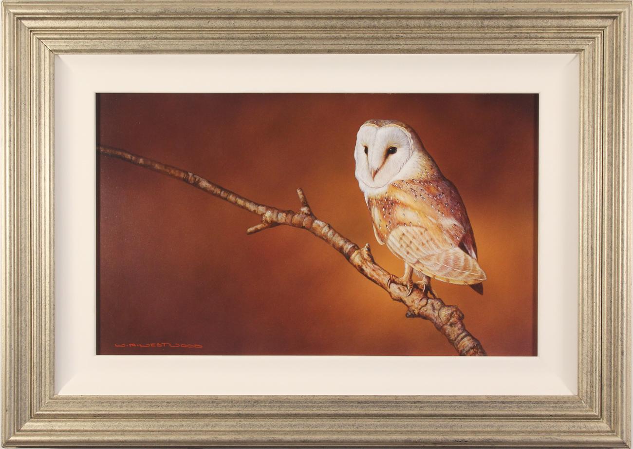 Wayne Westwood, Original oil painting on panel, Barn Owl, click to enlarge