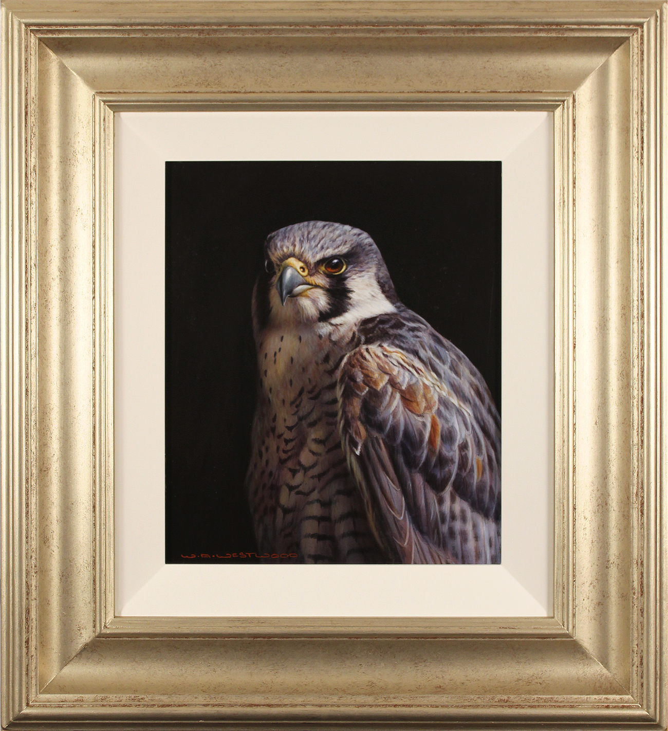 Wayne Westwood, Original oil painting on panel, Peregrine Falcon. Click to enlarge