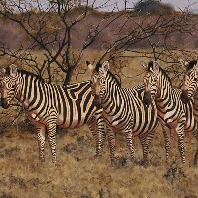 Stephen Park, Zebra, Original oil painting on panel